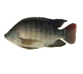 Telapia Fish Whole Frozen cleaned (400Gm-500Gm)